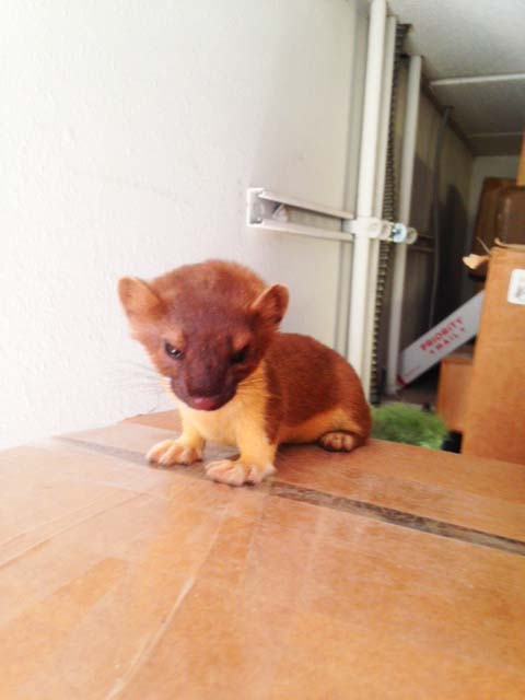 Ernie the Ermine—Shipping Manager